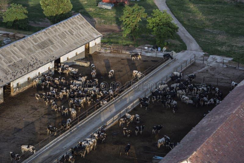 Ferme de vache image libre de droits