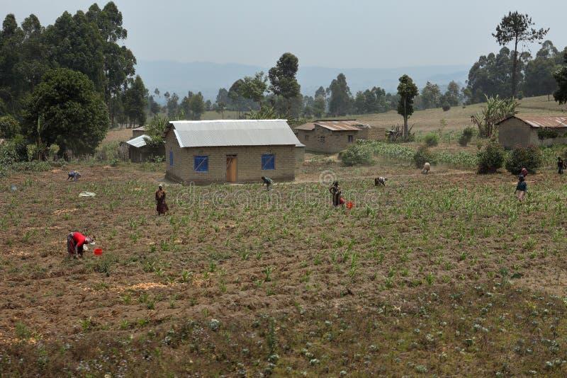 Ferme et agriculture en Tanzanie photographie stock