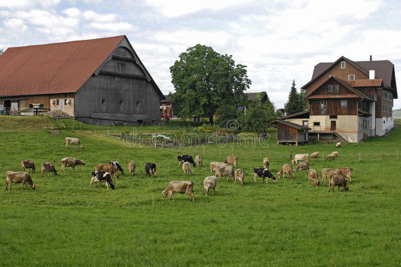 Ferme suisse type photo stock