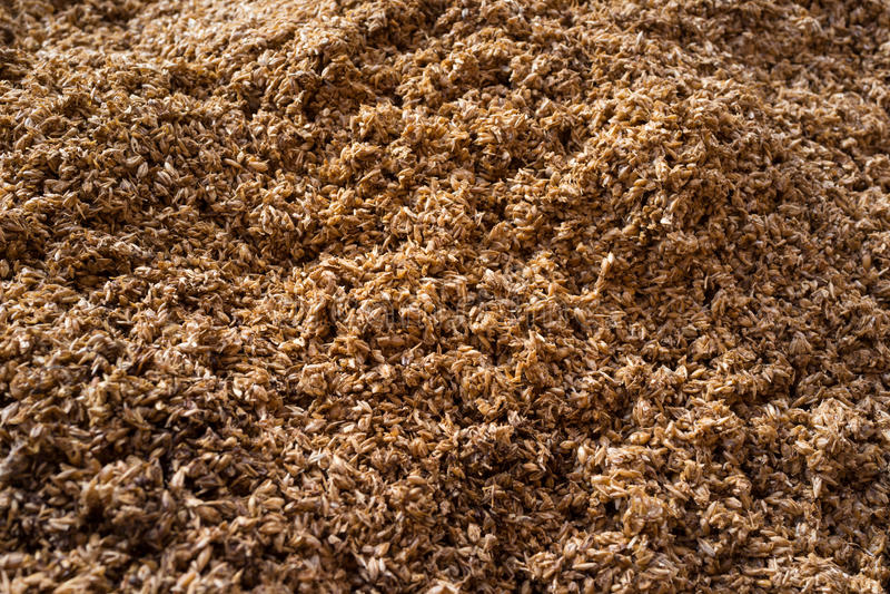 Fermentation de grains de malt photo libre de droits