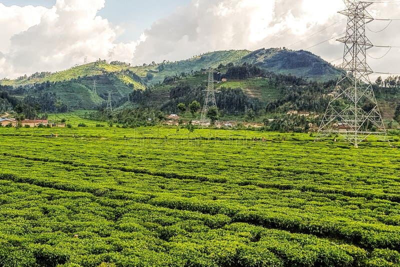 Fermes sur des flancs de coteau au Rwanda, Afrique de l'Est image libre de droits