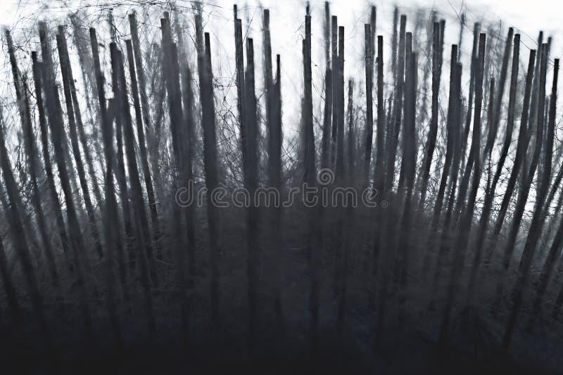 Fermeture d'aiguilles en acier et de poils d'animaux domestiques cueillis au cours de la séance de culture Allégation de la forêt photographie stock libre de droits
