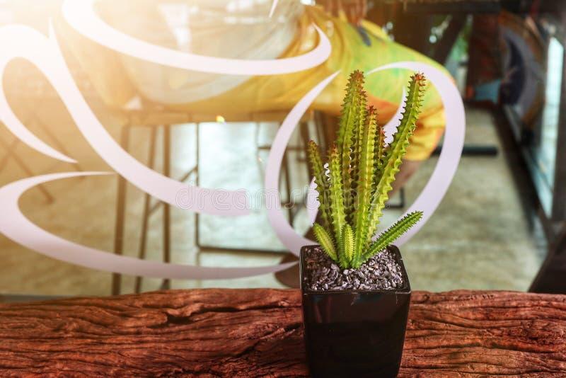 Fermeture d'un cantu vert dans une marmite noire posée sur un plancher de bois dans un café photographie stock
