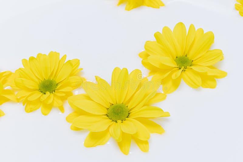 Fermeture de belles fleurs jaunes dans le lait Bain de lait photo libre de droits