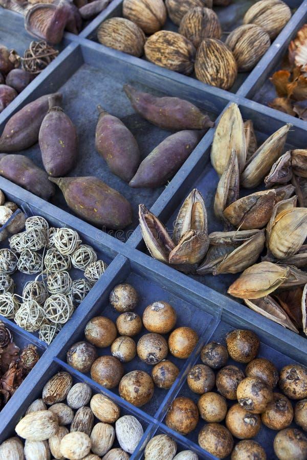 Fermeture des ingrédients pour la cuisine sorcière photographie stock libre de droits