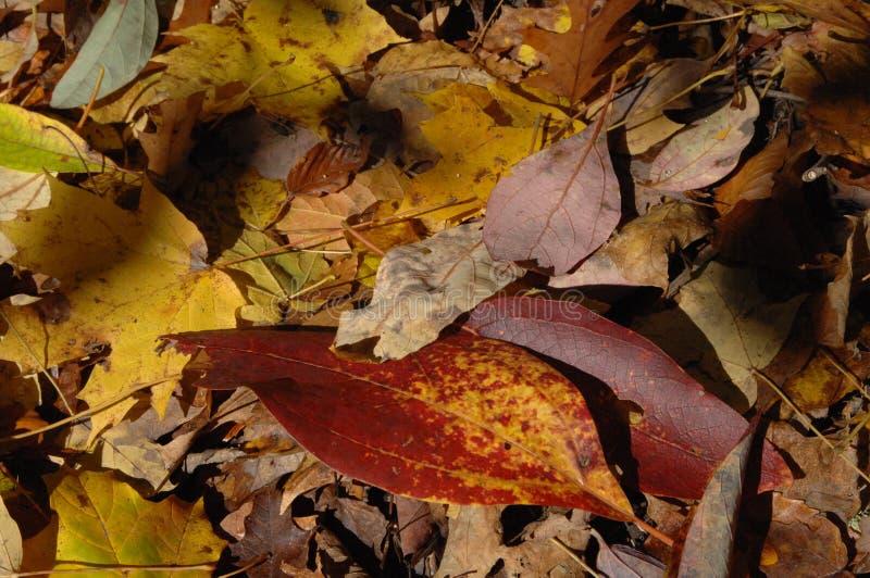 Fermeture du feuillage d'automne photo stock