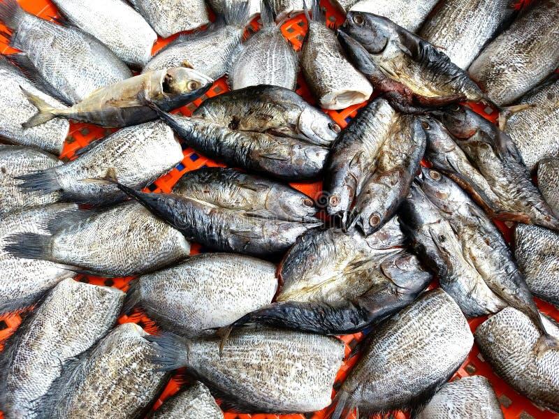 Fermez vers le haut des beaucoup le maquereau, les poissons de saba et le muscle pectoral de Trichogaster sur le filet en plastiq photo stock