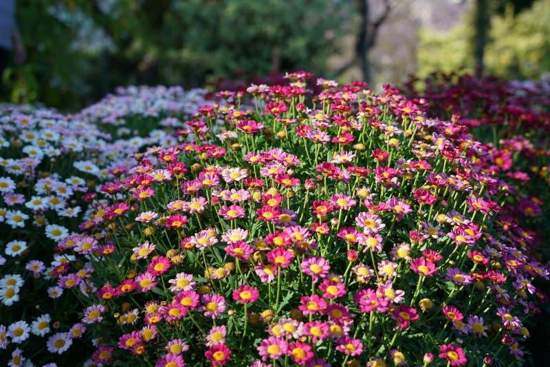 Fermez-vous avec les fleurs sp?cifiques de la Mad?re photos stock