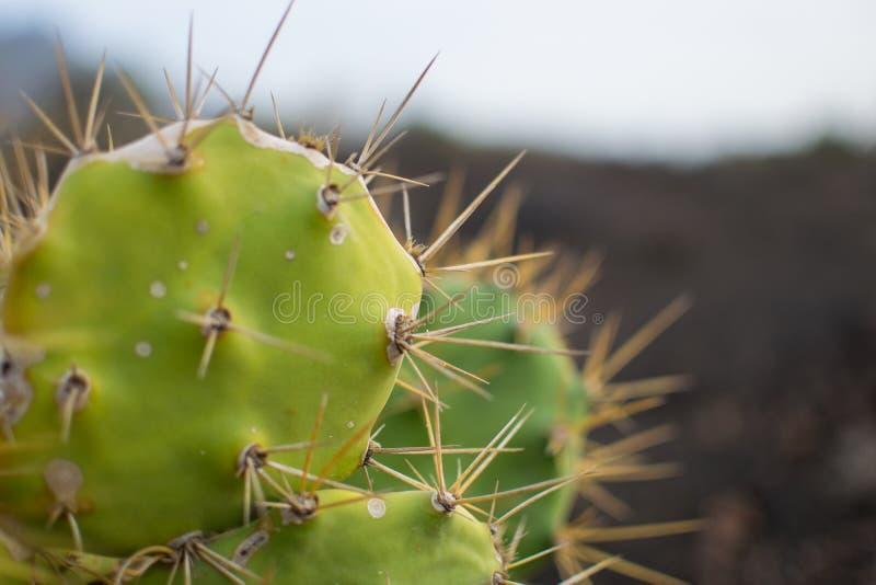Fermez-vous d'un cactus images libres de droits