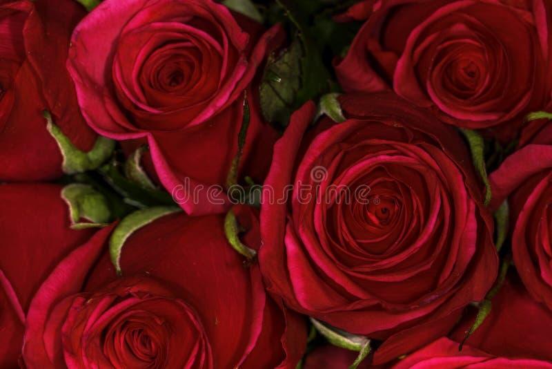 Fermez-vous d'un groupe de roses rouges vues d'en haut photographie stock