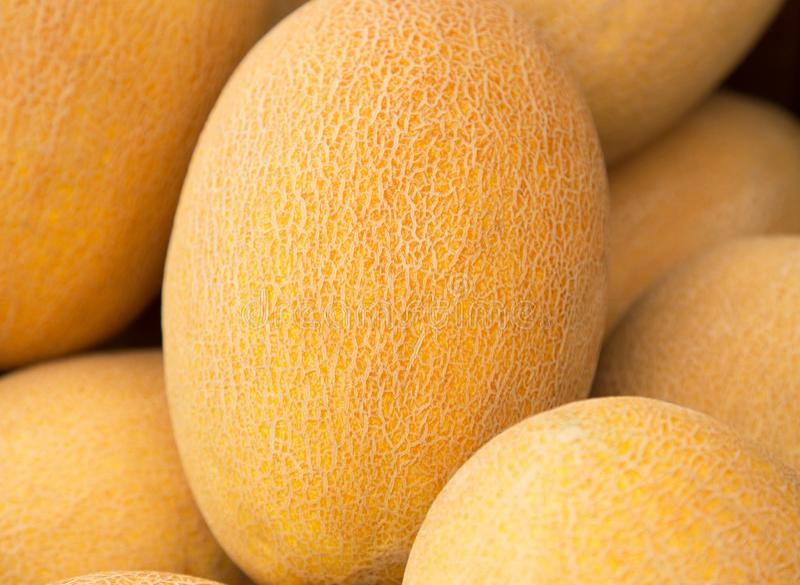 Fermez-vous d'un melon jaune mûr, culture fraîche image libre de droits