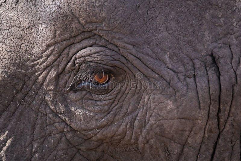 Fermez-vous d'un oeil d'?l?phant photo libre de droits