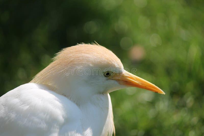 Download Fermez-vous d'un oiseau image stock. Image du rose, d0 - 45351591