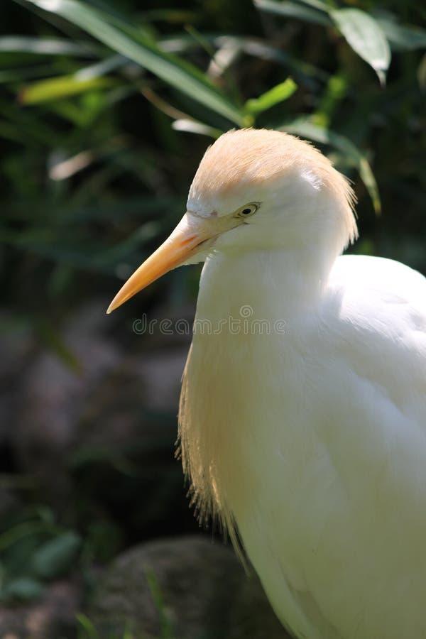 Download Fermez-vous d'un oiseau photo stock. Image du rose, blanc - 45351600