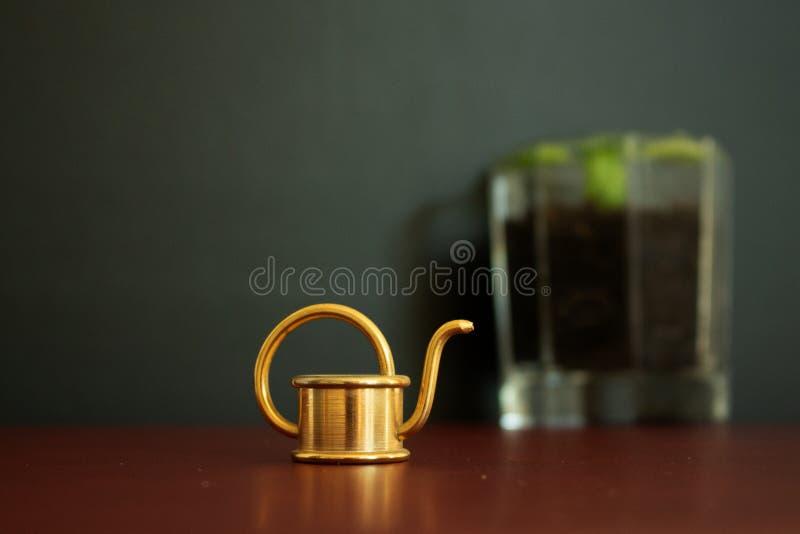Fermez-vous d'un petit outil d'or de boîte d'arrosage et d'un verre remplis de basilic à l'arrière-plan photo libre de droits