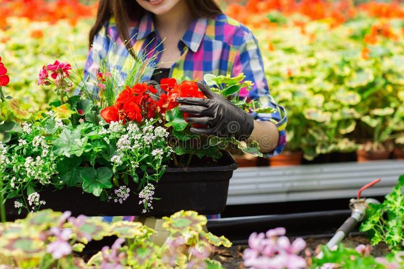 Fermez-vous d'une belle fille de sourire, une ouvrière avec des fleurs en serre chaude Travail de concept en serre chaude photos libres de droits