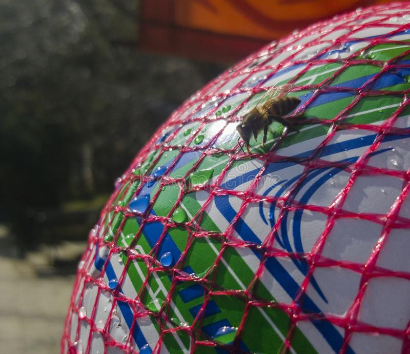 Fermez-vous d'une eau potable d'abeille assoiffée sur une boule en plastique Concept pour l'adaptation environnementale images libres de droits