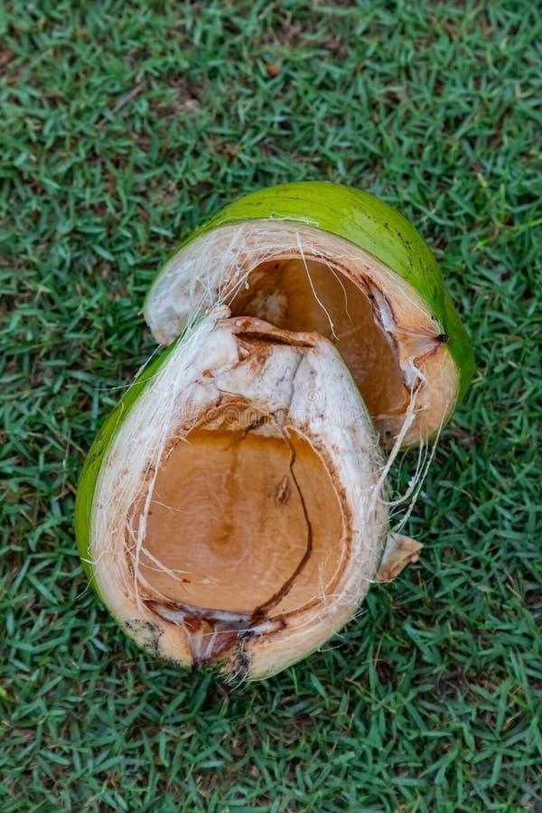 Fermez-vous d'une noix de coco ouverte verte au-dessus d'herbe verte dans Bali Indonésie images stock