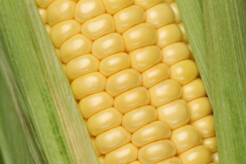 Fermez-vous d'une usine de maïs images stock