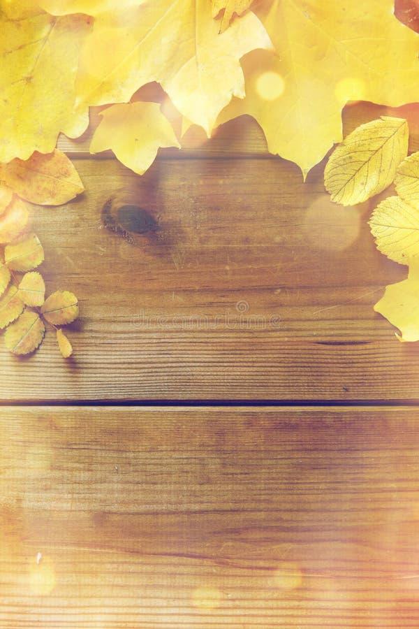 Fermez-vous de beaucoup de différentes feuilles d'automne tombées photographie stock
