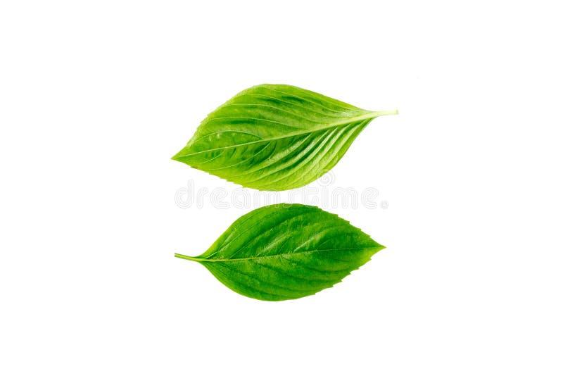 Fermez-vous de deux feuilles vertes sur les milieux blancs photo stock