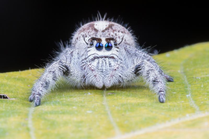 Fermez-vous de l'araignée photographie stock