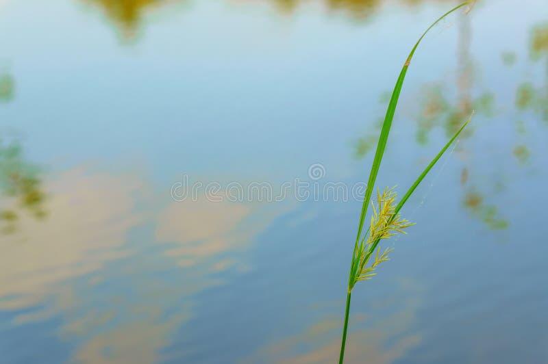 Fermez-vous de l'herbe pour la détente image stock