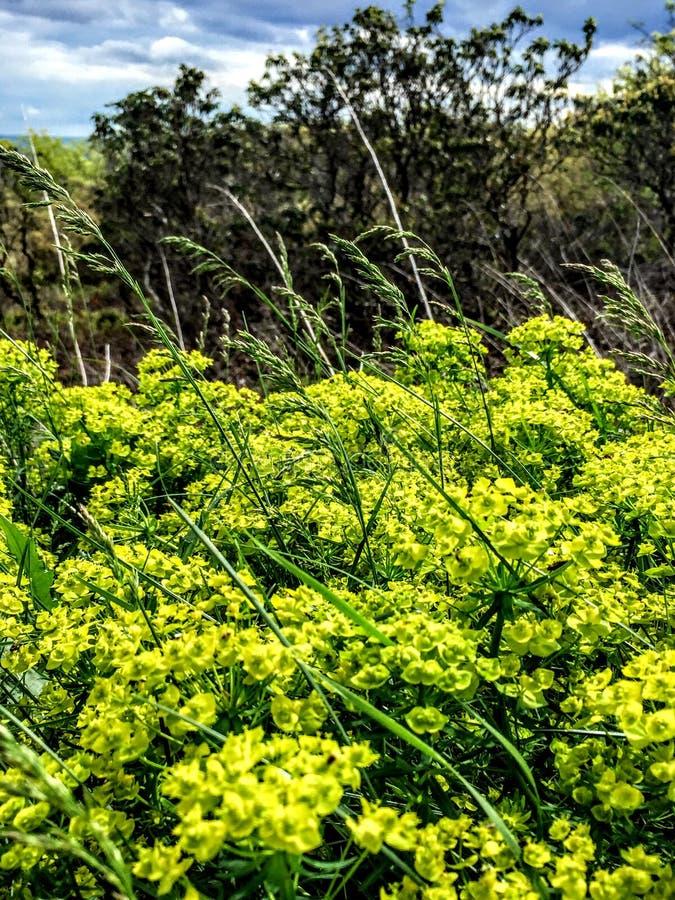 Fermez-vous de l'herbe sauvage et du ciel photographie stock libre de droits