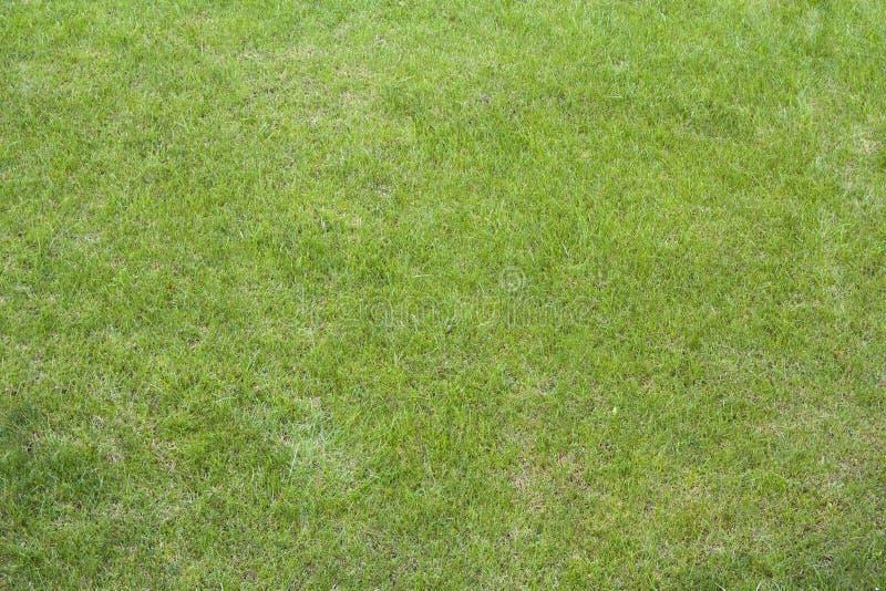 Fermez-vous de l'herbe vert clair somptueuse de ressort frais propre Le fond, la pelouse, le football et le basket-ball mettent e photos libres de droits
