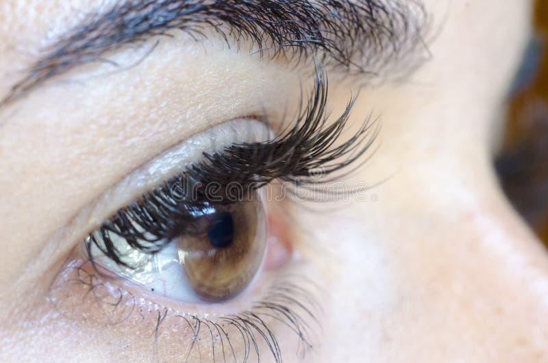 Fermez-vous de l'oeil brun femelle sans composent, de longs mèches et ey photographie stock