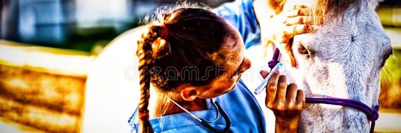 Fermez-vous de l'oeil de examen de cheval de vétérinaire féminin image libre de droits