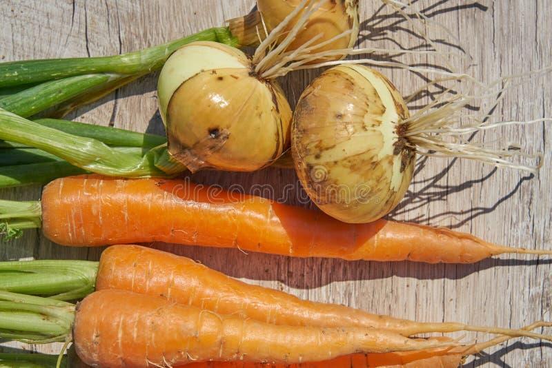 Fermez-vous de l'oignon et de la carotte organiques du cru récemment récoltés sur la table en bois images libres de droits