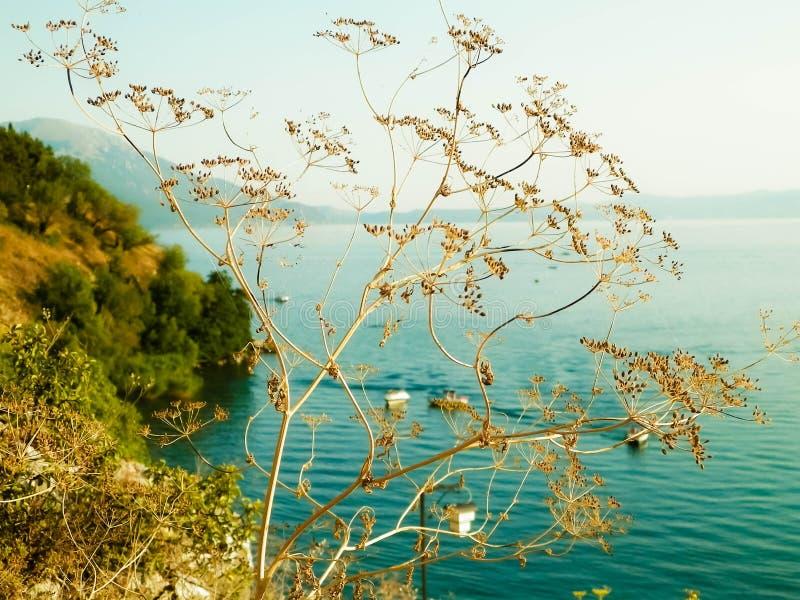 Fermez-vous de l'usine sèche et de la belle eau du lac Ohrid, Macédoine photos libres de droits