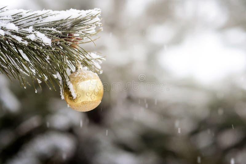 Fermez-vous de la boule jaune de Noël sur une branche d'arbre de sapin image libre de droits