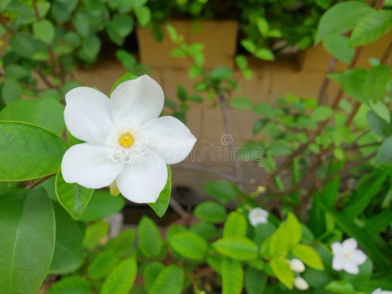 Fermez-vous de la fleur blanche sur le fond brouillé image stock