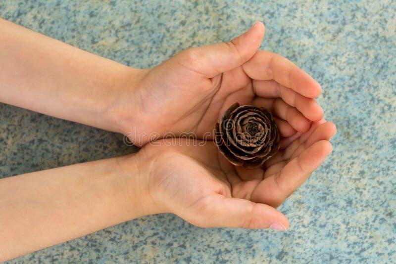 Fermez-vous de la main du ` s d'enfant tenant un c?ne de pin avec un fond brouill? naturel Peu fille tient le c?ne dans des ses m photos stock