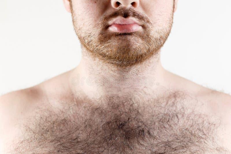 Fermez-vous de la moustache de l'homme, de la barbe et du coffre velu photo stock