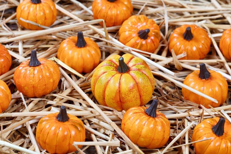 Fermez-vous de la paille et des potirons secs sur le bois rustique pour l'automne h photos stock