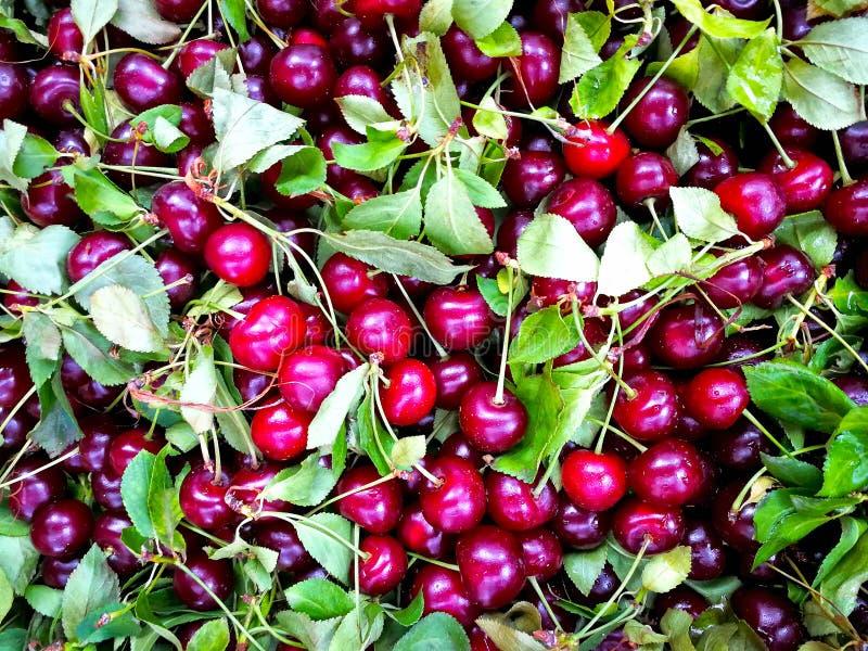 Fermez-vous de la pile des cerises mûres avec des tiges et des feuilles Grande collection de cerises rouges fraîches Fond mûr de  photos libres de droits