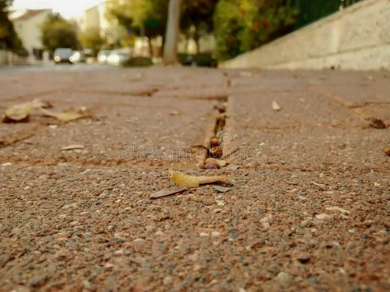 Fermez-vous de la promenade latérale de brique avec les feuilles et les grains secs et le t photographie stock libre de droits