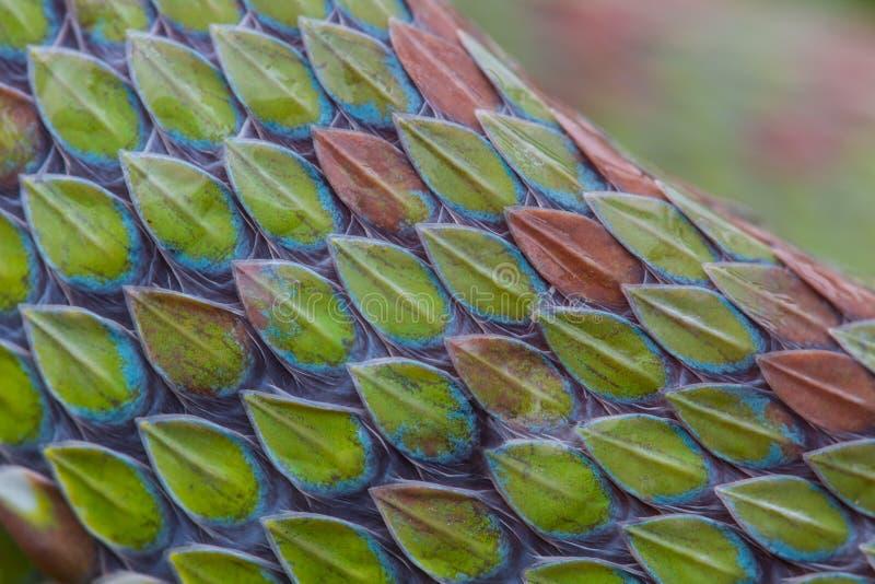 Fermez-vous de la texture de peau de serpent image stock