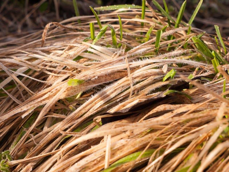 fermez-vous de la touffe de l'herbe jaune sur le plancher en dehors de la texture images stock