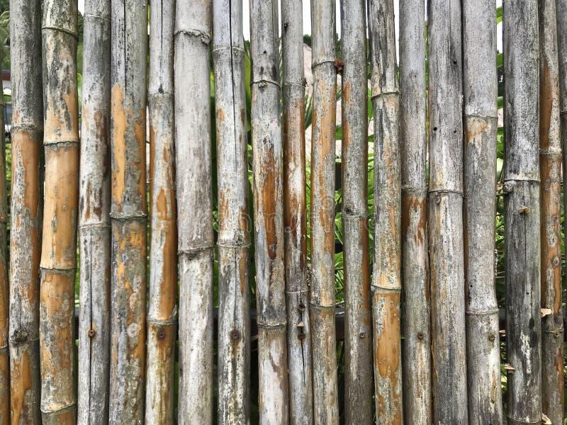 Fermez-vous de la vieille texture en bambou de fond image stock