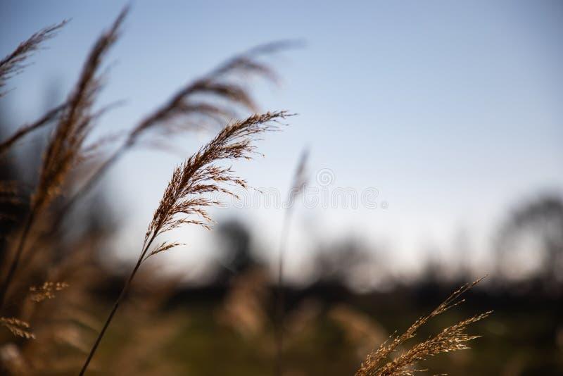 Fermez-vous de quelques branches de la chaleur avec le ciel bleu photographie stock