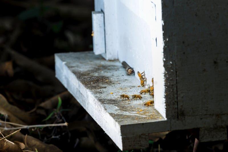 Fermez-vous des abeilles de vol Ruche et abeilles en bois photo stock