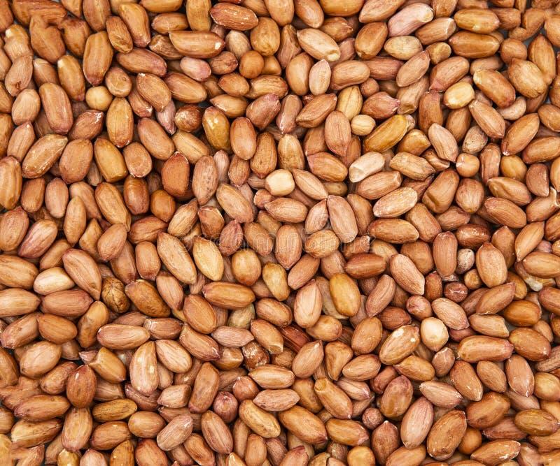 Fermez-vous des arachides non épluchées photo stock