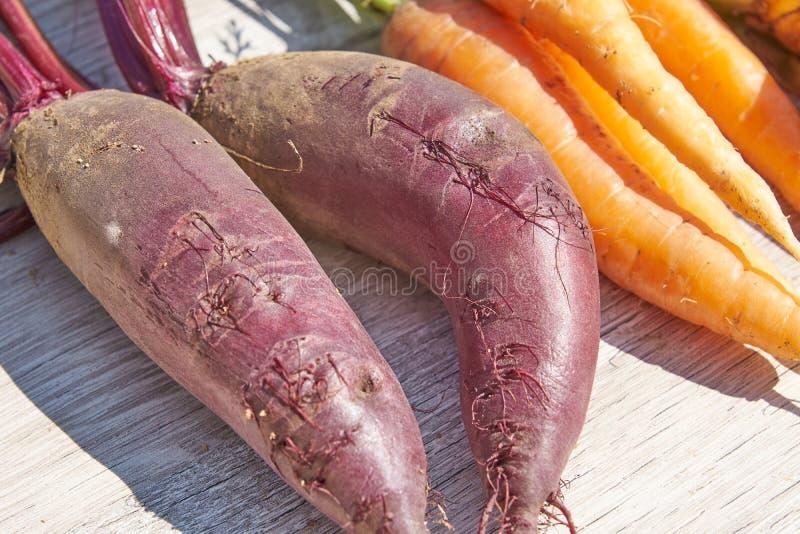 Fermez-vous des betteraves, de l'oignon et de la carotte organiques du cru récemment récoltés sur la table en bois image libre de droits