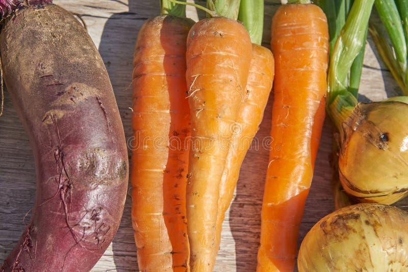 Fermez-vous des betteraves, de l'oignon et de la carotte organiques du cru récemment récoltés sur la table en bois Vue sup?rieure images stock
