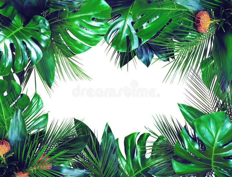 Fermez-vous des bouquets de diverses feuilles tropicales fraîches vert-foncé sur le fond blanc photos libres de droits