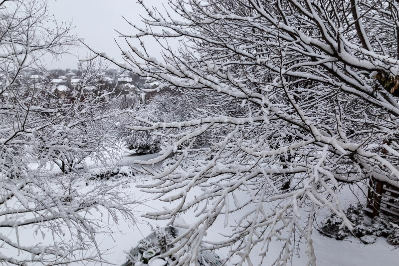 Fermez-vous des branches d'arbre fraîches de revêtement de neige photo libre de droits